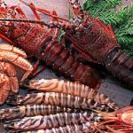 crabsea3