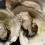 oyster-989179_1920